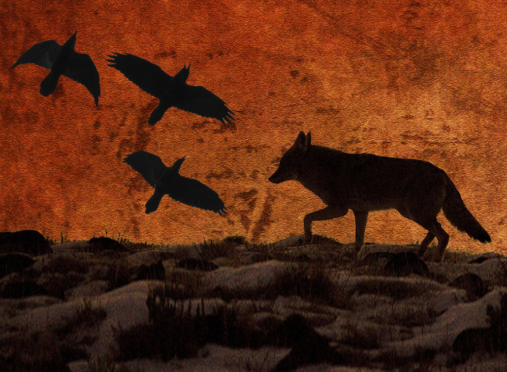 Guest Post: Crow and Coyote Hunt: Unsuccessful, but not without reward.  |Rob Giebel