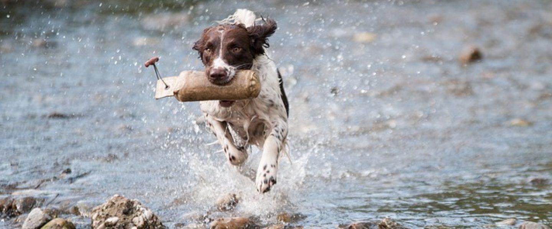 dog-1212400_640