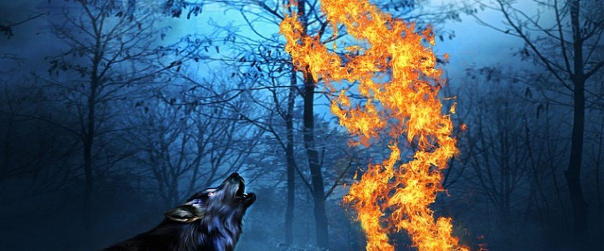 wolf-1961920_640