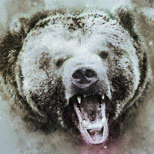 bear-3895109_640